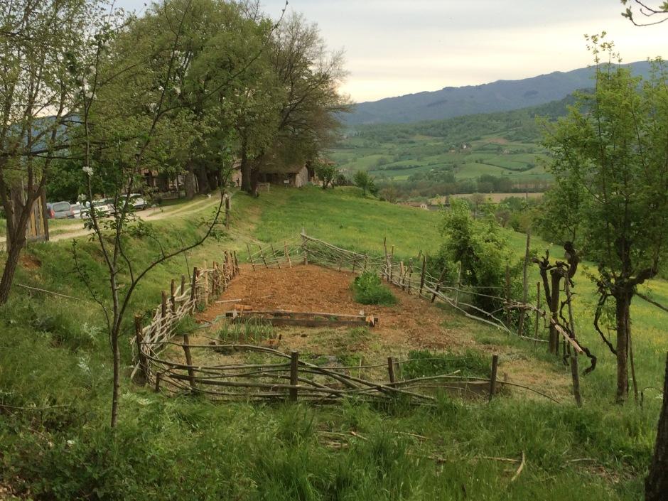 Arca_Dantesca Fattoria_Poggio_di_Dante patata_antica arte_agricola andrea_d'amore