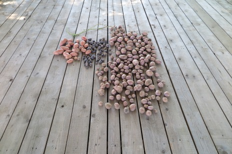 Potato collection